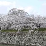 姫路市の条例・施行令の検索方法