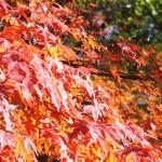 秋を愛でる 神戸市立森林植物園2013