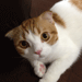 eye_cat1