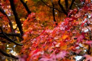 03_秋の色合い