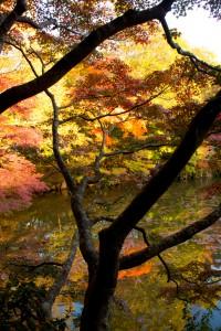 13_濃淡の紅葉