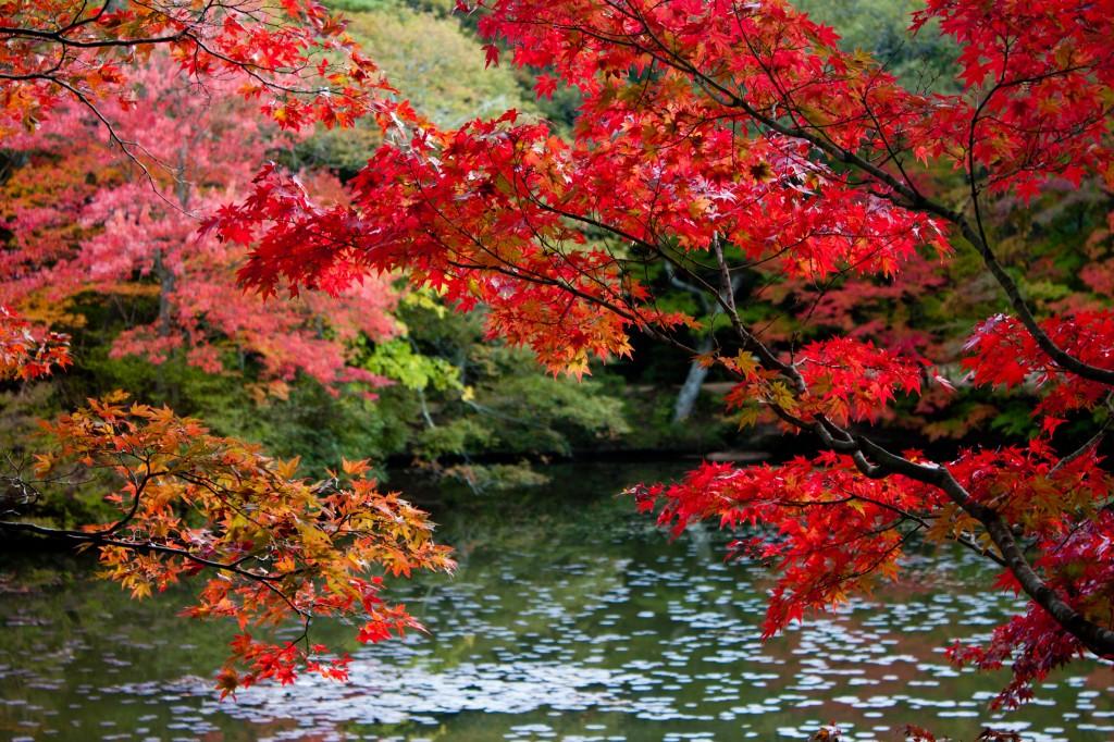 15_そうだ京都へ行こう