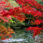 神戸市立森林植物園2014・紅葉
