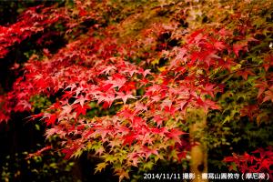 01_紅葉(A)